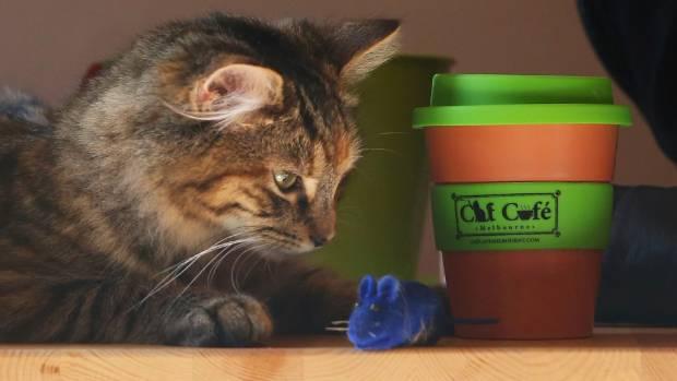 Cat Cafe Melbourne.