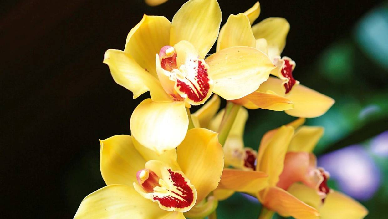 Orchids 101 A Complete Guide To Keeping Indoor Orchids Alive