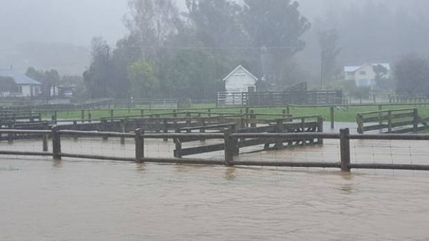 The sale yards are under water at Little River.