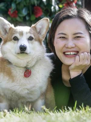 Jack and Joyce Luo spent more than $20,000 to bring their beloved welsh corgis Amy and Lucky from Beijing when they ...