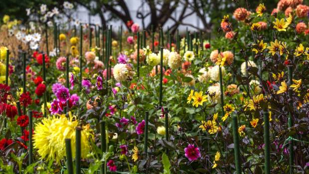 Is christchurch still the garden city blooming right it for Grow landscapes christchurch