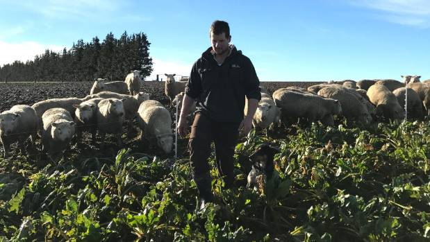 West Southland farmer Hayden McKenzie prefers selenium prills as they're safe, easy and efficient.