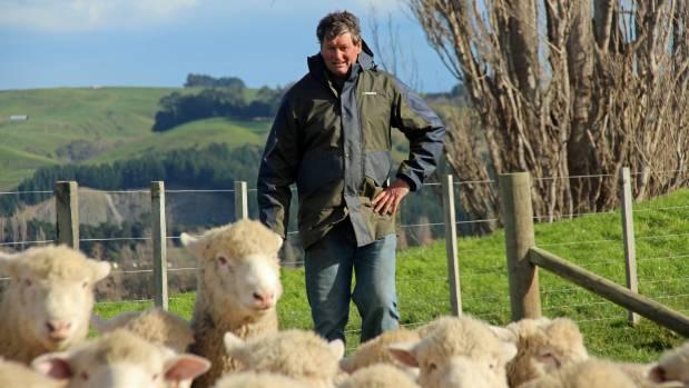 Rick Lee with stud poll dorset ram hoggets on his Elsthorpe farm.