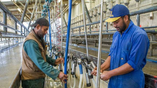 """Herd manager Abaramo Mono """"AB"""" Borisi says the immigration changes will put a lot of stress on farm owners and make ..."""
