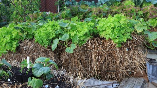 You can also use raised beds, pots or create a straw-bale garden to raise crops out of wet soil.