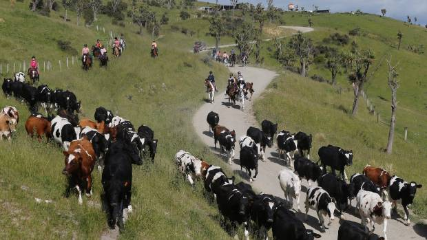 Fonterra lifts Farmgate Milk Price forecast