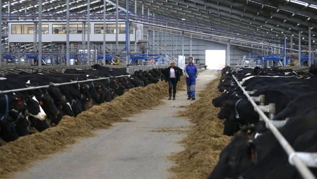 Rich List South Canterbury Farmer Devastated By Impact Of