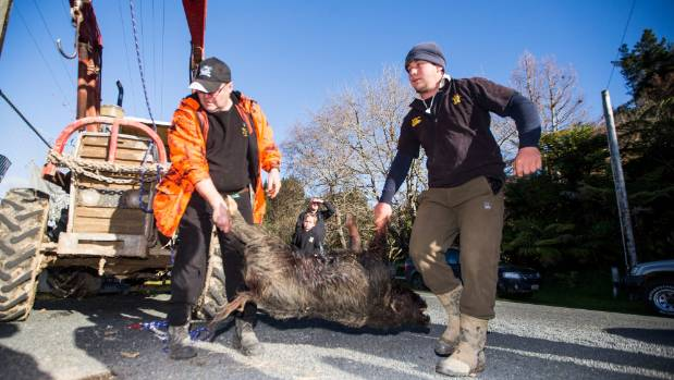 Adam Black, 26, of Awakino, on right, with his pig that came in at 41.7kg.