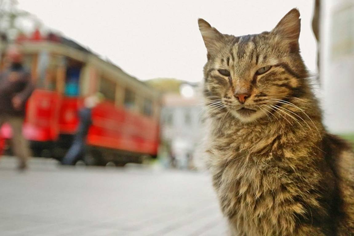 13f12a703b Kedi  The documentary that s a cat s-eye view of Istanbul
