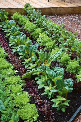 12. Plant close together: Treat your vege garden as you would a pot of flowering annuals, grouping plants closely ...