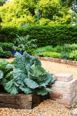 7. Define paths & edges: Creating well-defined pathways between your vege beds improves accessibility and gives it a ...