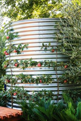 6. Grow espaliers: The ancient art of espaliering is enjoying a renaissance in contemporary edible gardens, as it's a ...