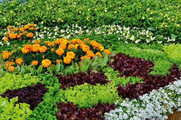 5. Create patterns: Rather than randomly planting flowers and vegetables together, you can make more impact with a ...