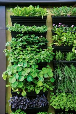 4. Go up: Making use of the vertical space is a great way to add interest, and create extra growing spaces in small ...
