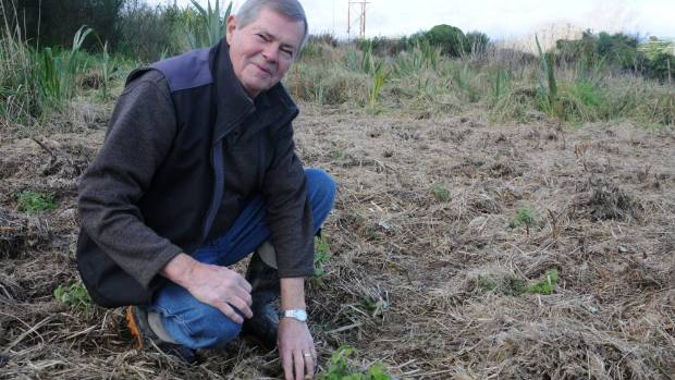 Gerry Brackenbury with some of the freshly planted native nettles.