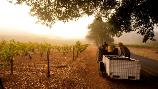 Vineyards have taken over Sonoma County to rival nearby Napa Valley as an important wine-making district.