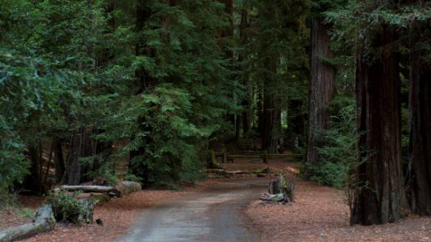 The Armstrong Redwood Native Park is a national attraction.