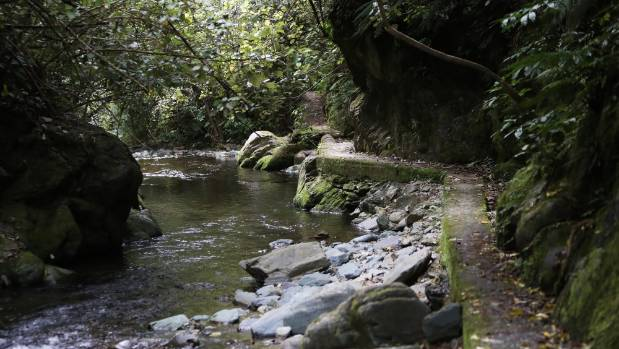 Nelson's Brook Waimarama Sanctuary was a water catchment reserve.
