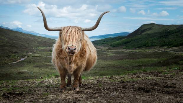 A local resident of the Isle of Skye.