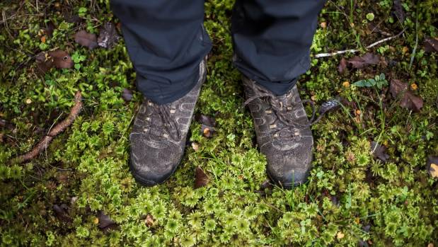 On the Hollyford Track you'll discover many things, including that moss is fascinating.