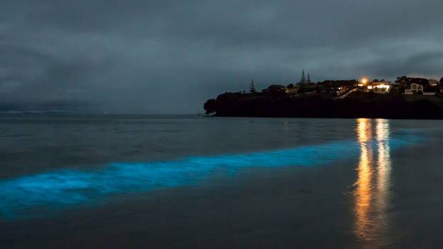 Bioluminescence at Manly Beach lights up with the wave motion.