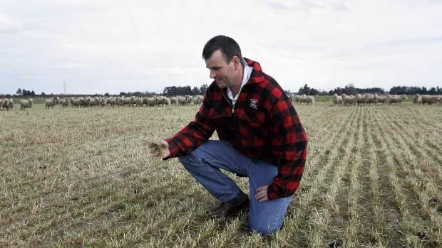 Canterbury farmer John Ridgen looks over the drying land on his family's 1865 Greendale farm. The photo was taken in ...