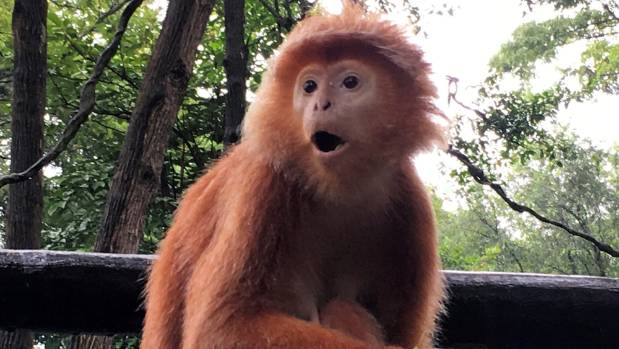One of the more than 2500 residents of Singapore Zoo.