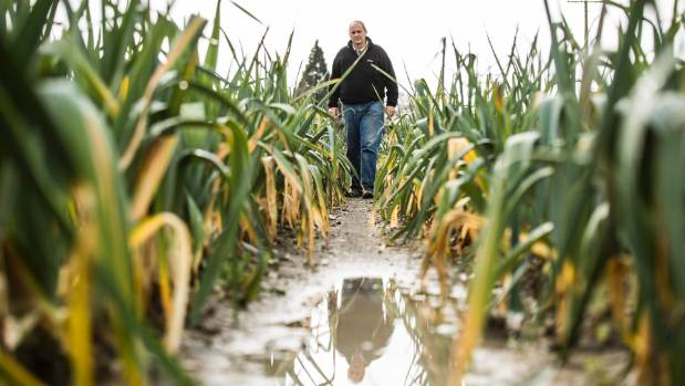 Mark O'Connor says water security is crucial for his market gardening business.