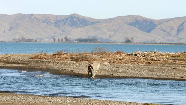 A man checks his net at the Wairau Diversion in Marlborough during whitebait season last year.