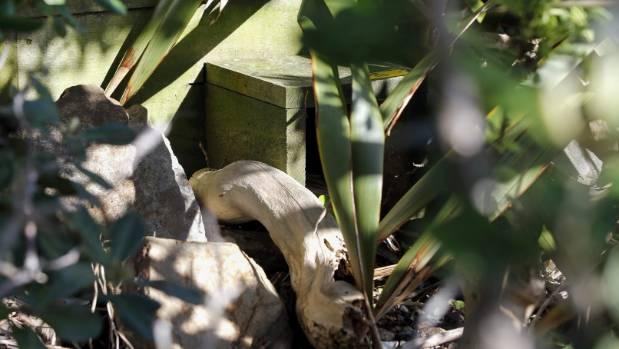 A penguin nesting box beside Shelly Bay Rd.