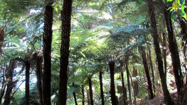 The Waitakere Ranges contain much more than just kauri.
