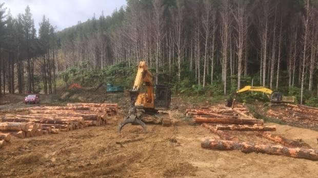 A pine logging operation at Mangakahia, near Dargaville.