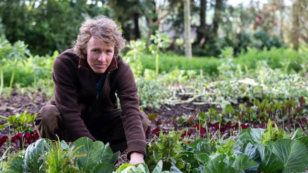 Aden checks for any early signs of white butterfly among the brassicas – too cold and wet for them yet.