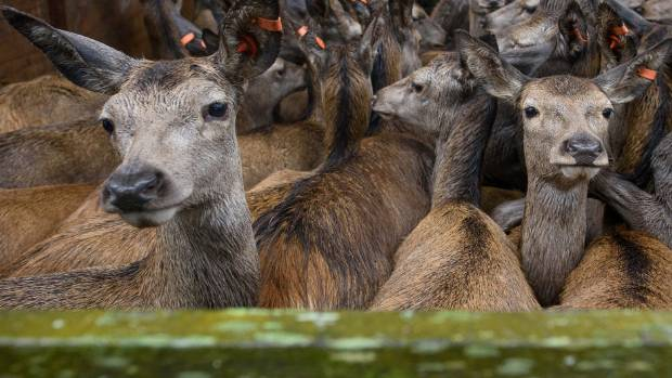 Venison approaches record prices as US appetite grows