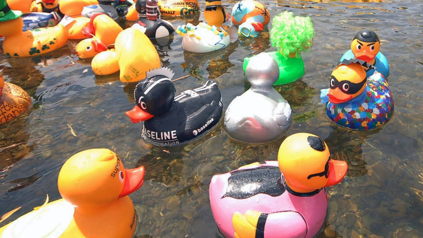 Daffodil Duck Race Designed To Raise Cash To Fight Cancer