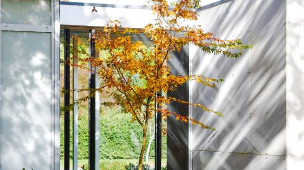 A potted maple that can be viewed from the entrance, through the glass bridge towards the garden beyond.