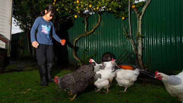 Anika Puata-Tkalia has been running her micro business selling free range chicken eggs for almost a year.