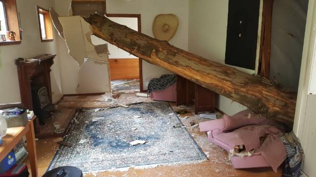 A pine tree crashes into a Marlborough Sounds bach after being cut down by forestry workers.