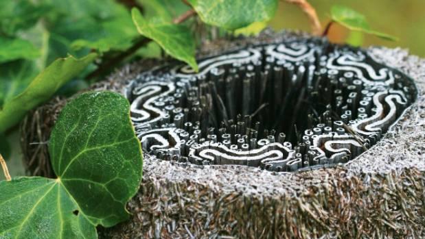 'Patterning of a Ponga Stump'.