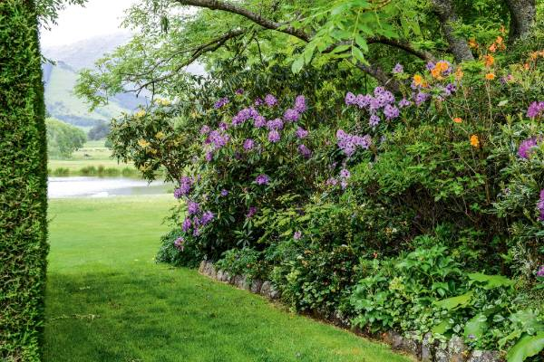 Rhododendrons line the scenic avenue leading down to the pond.