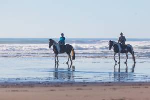 Horses are required to be ridden below the high tide mark between the times of mid and low tide at Orewa Beach, ...
