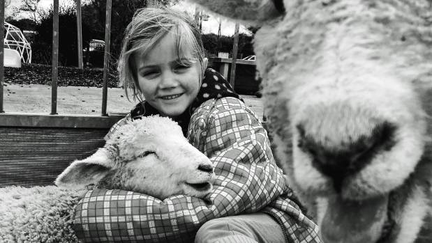 Lily Thomas with her pet lambs.
