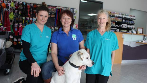 Animals like Tin Tin, the deaf English Pointer, can be retrained, says CARE Animal Rescue's Helen Rabinska. She is ...