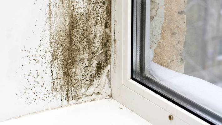 New Zealand Has High Rates Of Both Asthma And Mouldy Homes.