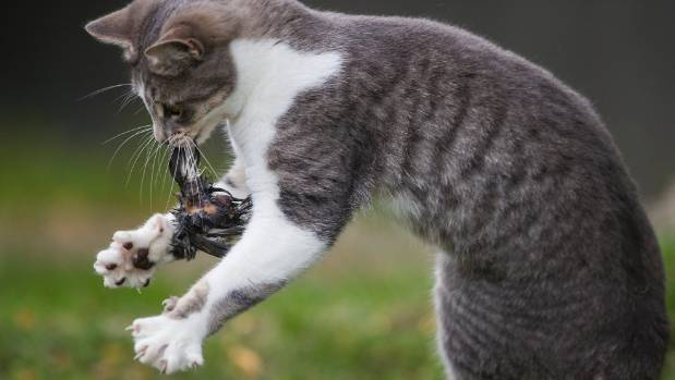 Feral cats are driving some birds to the brink of extinction