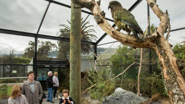 The new kea enclosure at Natureland drew plenty of admirers when it opened on Saturday.