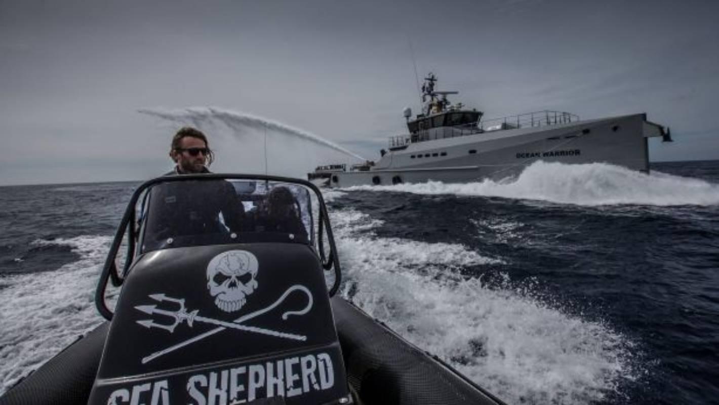 sea shepherd claims victory as japan leaves international