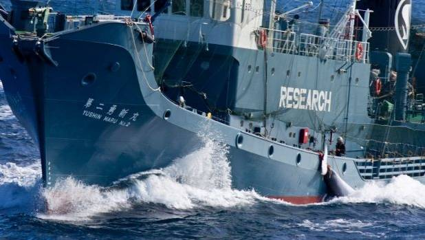 Anti-Whaling Activists Prove No Match for Japanese Military Leviathan