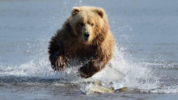 Thankfully no bear attacks.
