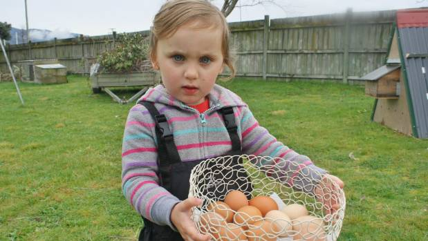 Ayvah Knight-Mackle, 3, collects eggs from her chickens every day.